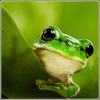 lenormf avatar